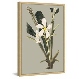 Botanical Cabinet IV' Framed Painting Print