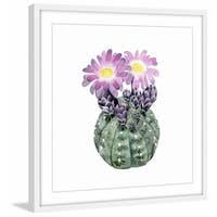 Cactus Bloom IV' Framed Painting Print
