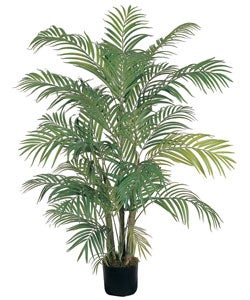 Areca Silk Palm Tree