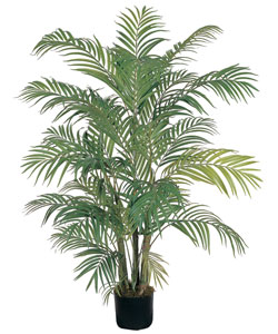 Areca Silk Palm Tree - Thumbnail 0