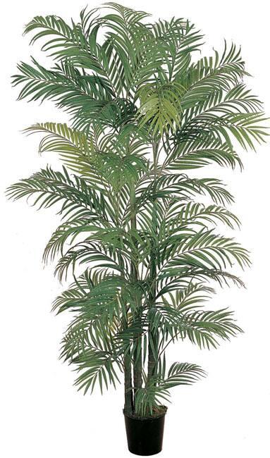 (6')Areca Silk Palm Tree