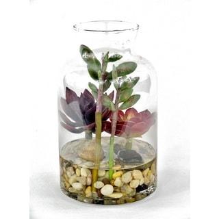 Gold Eagle Succulent Terrarium Plant Mix Floral Arrangement in Clear Vase with Rocks