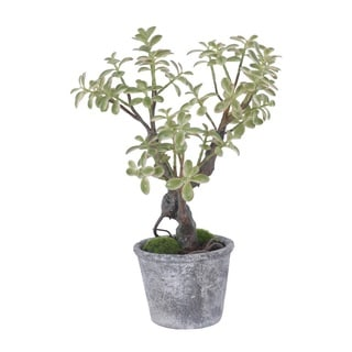 Gold Eagle Jade Potted Plant