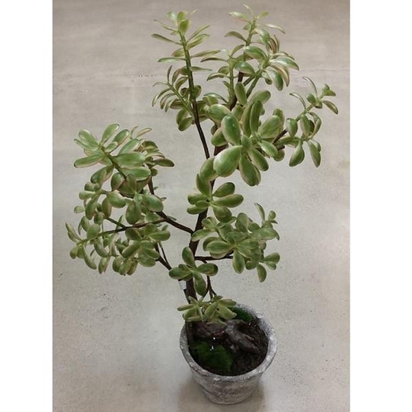 Golden Eagle Jade Artifical Potted Plant Arrangement