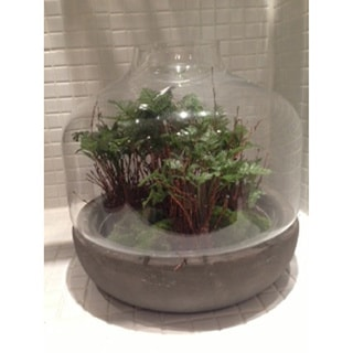 Gold Eagle Artifical Fern with Twigs in Cement/Glass Terrarium