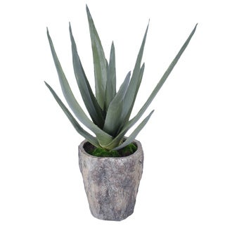 Gold Eagle Artifical Aloe Plant in Grey Cement Pot