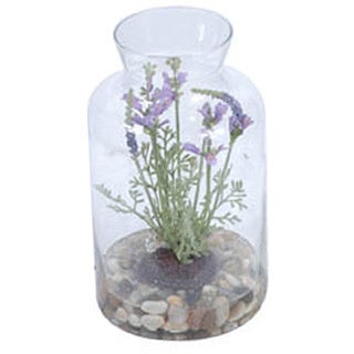 Gold Eagle Lavender with Rock Base in Clear Glass Terrarium Jar