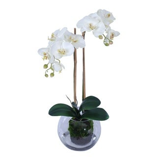 Phalaenopsis and Vase