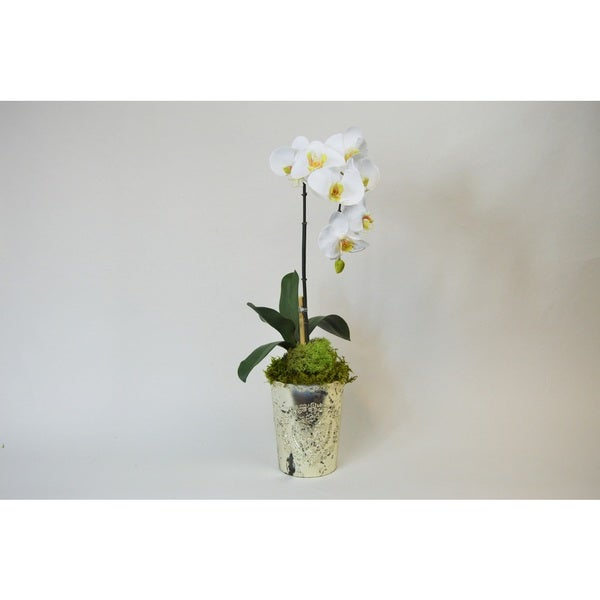 Shop White Silk Orchid In Vintage Mercury Glass Vase On Sale