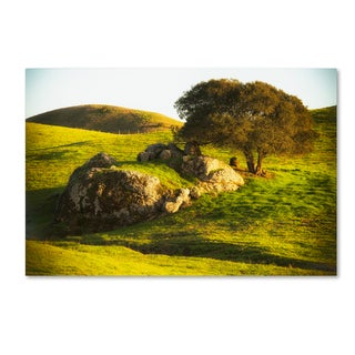 Lance Kuehne 'Rock and Tree' Canvas Art