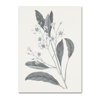 Wild Apple Portfolio 'Neutral Botanical V' Canvas Art