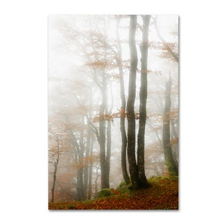 Philippe Sainte-Laudy 'Magic Hour in the Forest' Canvas Art