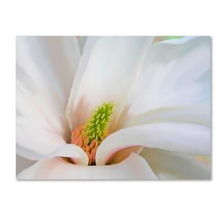 Tina Lavoie 'Magnoliaceae' Canvas Art