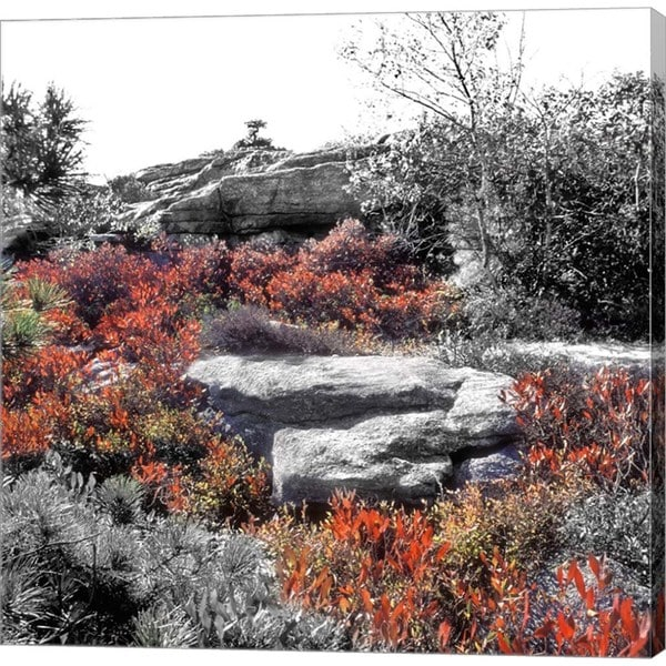 Harold Silverman 'Flowers and Boulders' Canvas Art