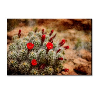 LightBoxJournal 'Desert Flower 3' Canvas Art