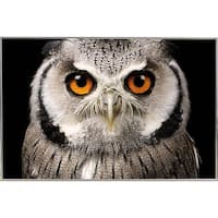 Owl Face Poster in a Silver Metal Frame (36x24)