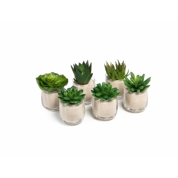 Sand Artificial Succulent with Glass Pot (Set of 6)