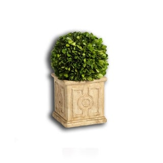 """Cinzia"" 14"" Tall Preserved Boxwood Topiary"