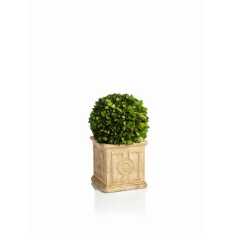 """Cinzia"" 10"" Tall Preserved Boxwood Topiary"