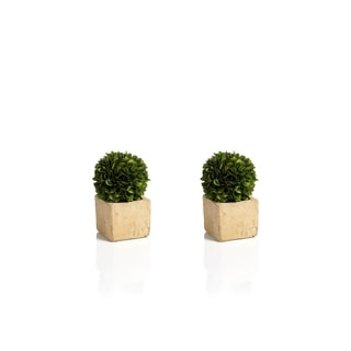 Zodax 2-Piece Carina Preserved Boxwood Topiary Set
