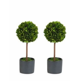 preserved boxwood topiary single ball set of 2