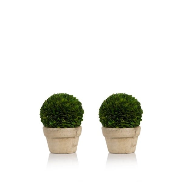 Preserved Boxwood Topiary, Single Ball (Set of 2). Opens flyout.