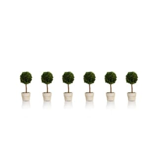 Zodax 6-Inch Tall Mini Single Ball Preserved Boxwood Topiary, Set of 6