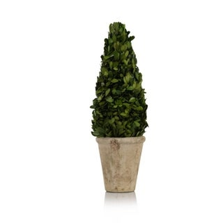 Zodax 15-Inch Tall Cone Shaped Preserved Boxwood Topiary