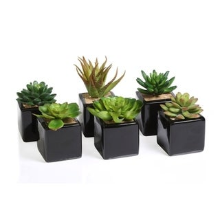 artificial succulent with ceramic pot set of 6