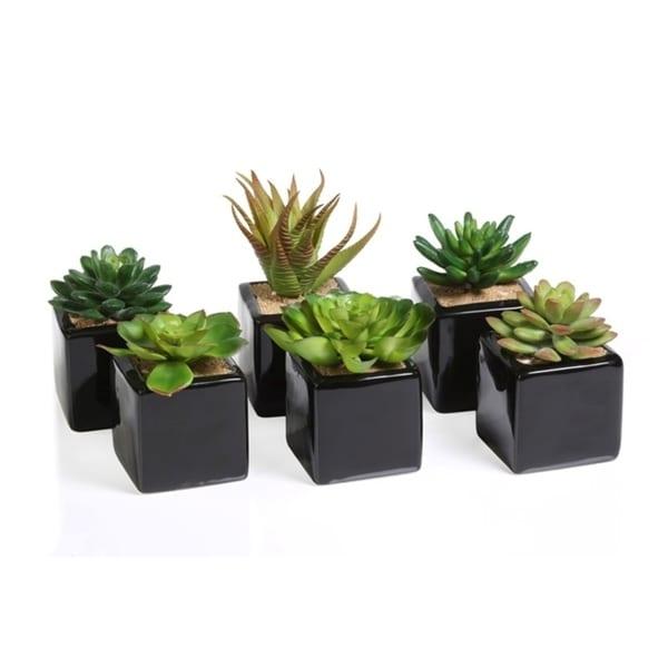 Artificial Succulent with Ceramic Pot (Set of 6)