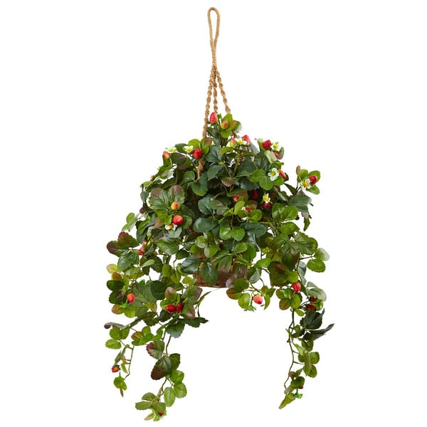 Strawberry Bush in Hanging Basket