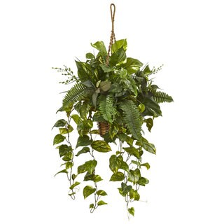 Nearly Natural Mixed Pothos and Boston Fern in Hanging Basket