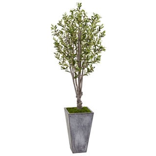6-foot Olive Tree in Stone Planter