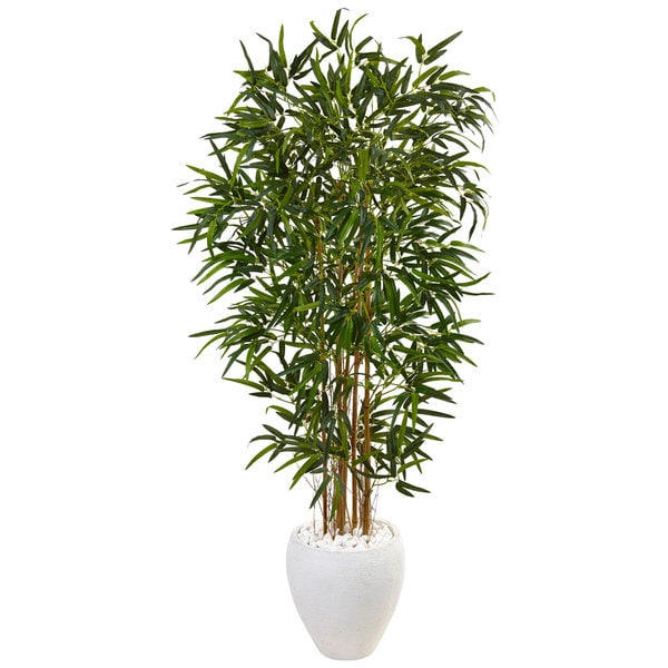 5-foot Bamboo Tree in Oval White Planter