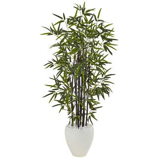 Black Bamboo 5-foot Tree in White Oval Planter