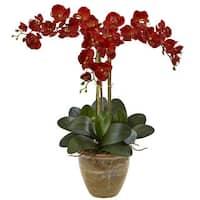 Nearly Natural Triple Stem Phalaenopsis Seasonal Arrangement