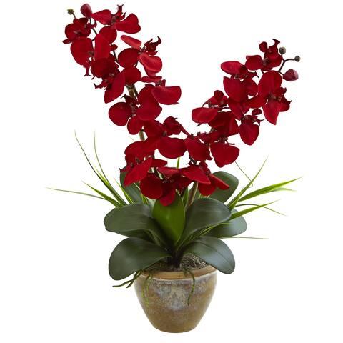 Seasonal Double Phalaenopsis Orchid Arrangement