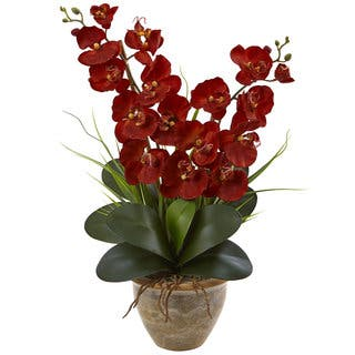 Seasonal Double Phalaenopsis Orchid Arrangement|https://ak1.ostkcdn.com/images/products/16564353/P22896531.jpg?impolicy=medium