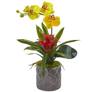 Mini Phalaenopsis Orchid and Bromeliad in Grey Vase