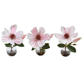 Magnolia in Votive Glass (Set of 3)