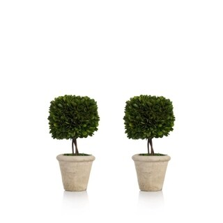 """9.5"""" Tall Preserved Boxwood Topiary, Square Shaped (Set of 2)"""