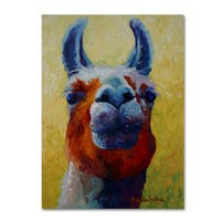 Marion Rose 'Llama I' Canvas Art