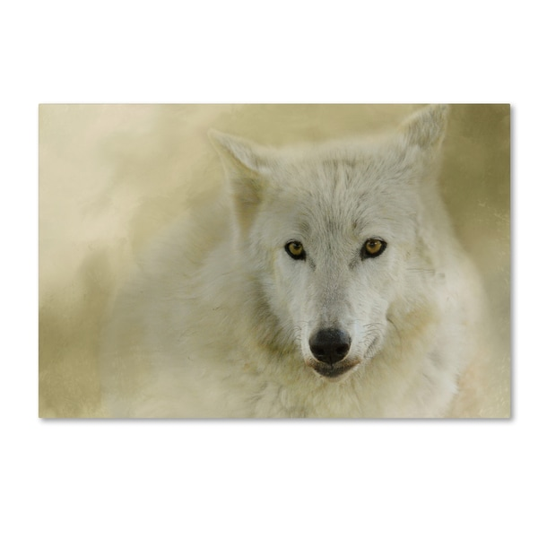 Jai Johnson 'Portrait Of A Timber Wolf' Canvas Art