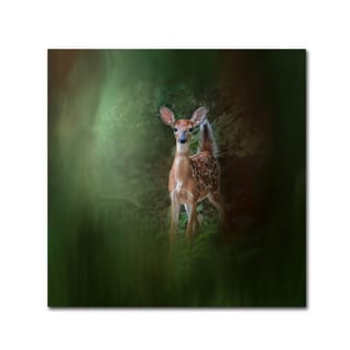 Jai Johnson 'Woodsy Summer Fawn' Canvas Art