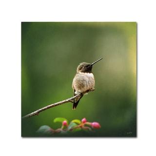 Jai Johnson 'Hummingbird In The Garden' Canvas Art