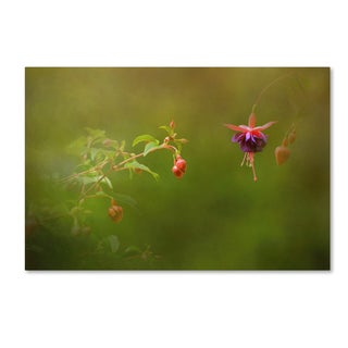 Jai Johnson 'Fuchsia Buds and Bloom' Canvas Art
