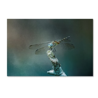 Jai Johnson 'Perched Dragonfly' Canvas Art