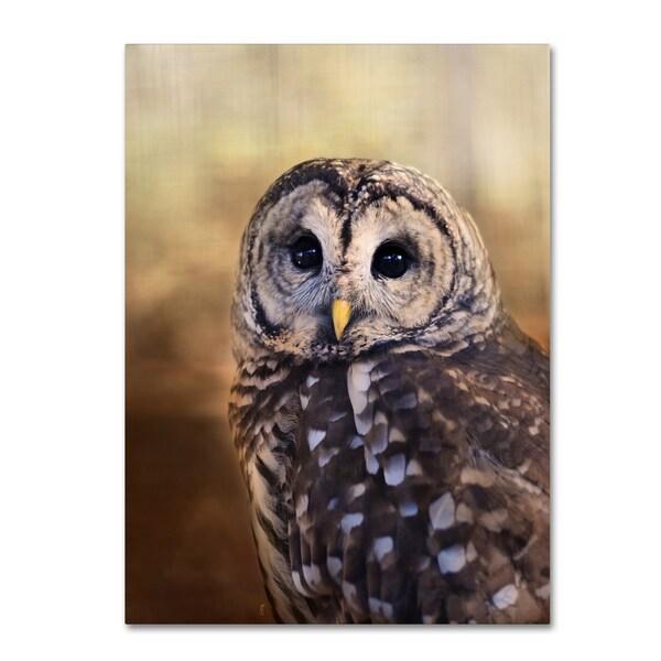 Jai Johnson 'The Wise Owl' Canvas Art