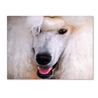 Jai Johnson 'White Standard Poodle Portrait' Canvas Art