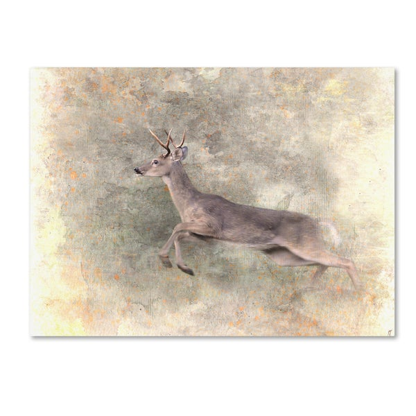 Jai Johnson 'Run Like The Wind White Tailed Buck' Canvas Art